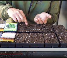 FYI: My NEW Favorite Seed Starting Method 🌱🌱🌱.