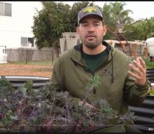 Gardening: 50+ Plants I'm Growing In My Spring Garden 🌱 🌷 🥕.