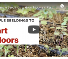 FYI: 8 Simple Seedlings to Grow Indoors – [Perfect for beginner seed starters]